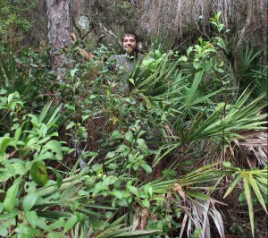 "In a healthy longleaf pine forest the groundcover should be grasses and some other plants that are about knee-high. As you can see from the growth around me (I am 6'2""), this vegetation is clearly overgrown. Woody shrubs have displaces other plants."