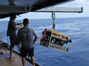 Deploying the Falcon ROV at Pulley Ridge mesophotic reef
