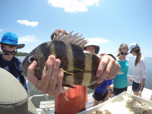 Austin Heil holding up a Sheepshead caught during Saturday at the Sea summer camp, hosted by the FSUCML.